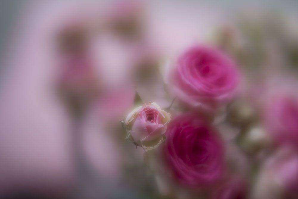 <span>Vorher (das Foto wurde mit dem Lensbaby Velvet 56mm) aufgenommen</span>