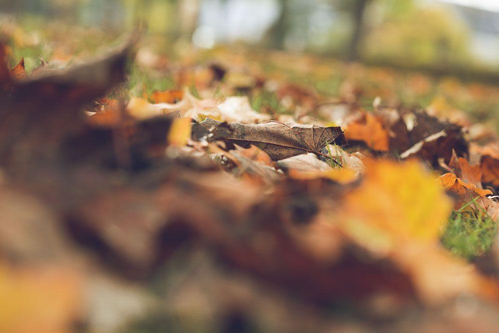 <span>Herbstlaub</span>