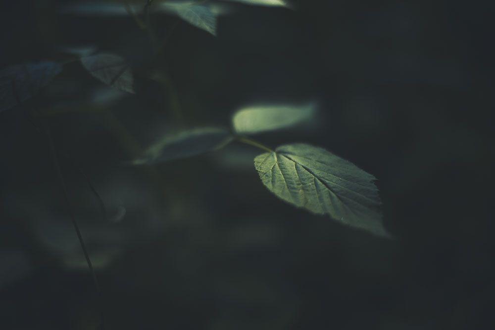 <span>Darkwood</span>